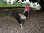 Grillieren auf dem Bauernhof